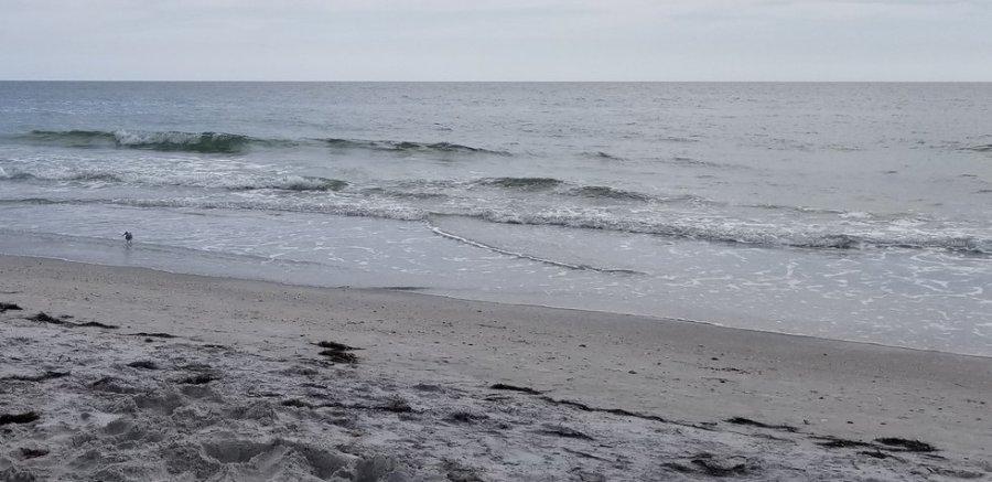 Sandpiper on Beach