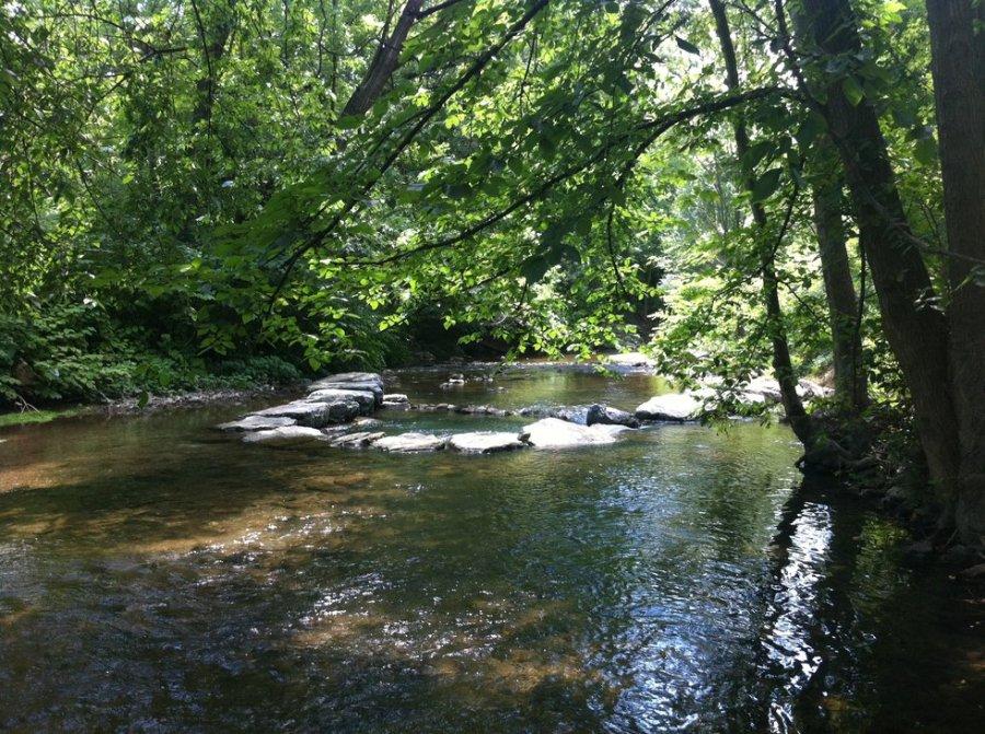 Stream Through the Woods